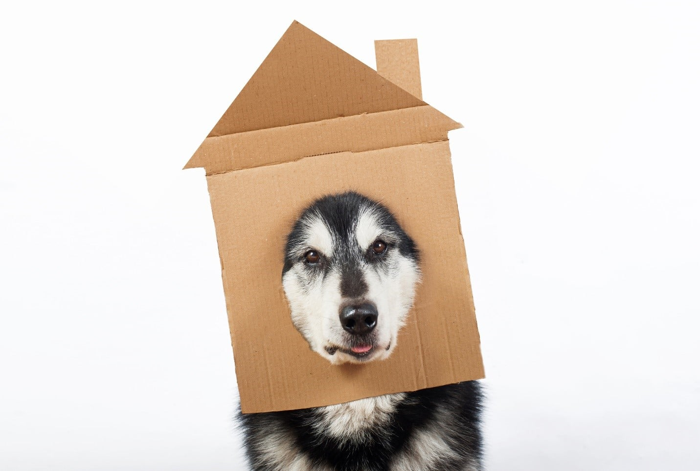 Dog with house mask
